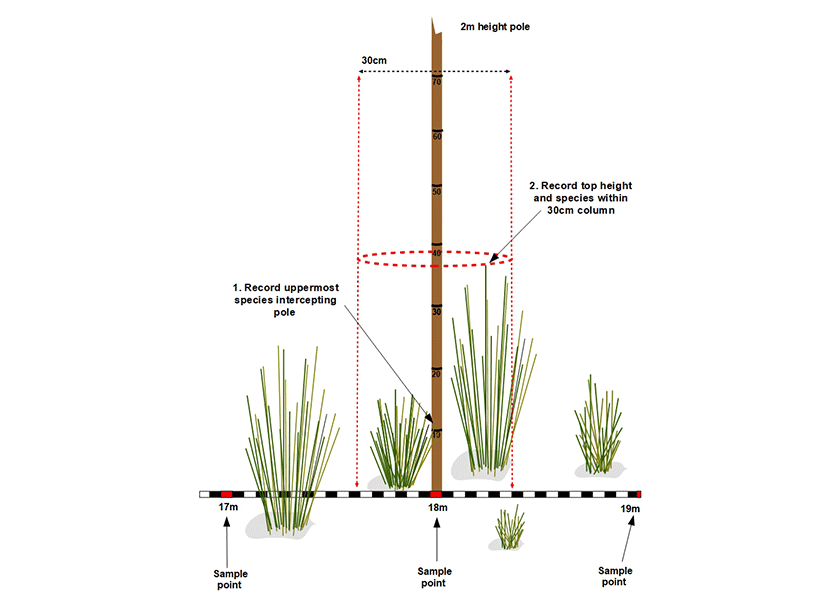Drop the sampling pole at 1m intervals along the transect tape. Record the uppermost species and height touching the pole (1); and record the top height of vegetation and the species within a 30cm diameter column of the pole (2).