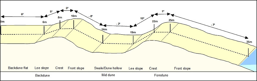 A coastal dune profile showing dune morphology including dune crest, slopes, swales and front slope, some or all of which may be present.